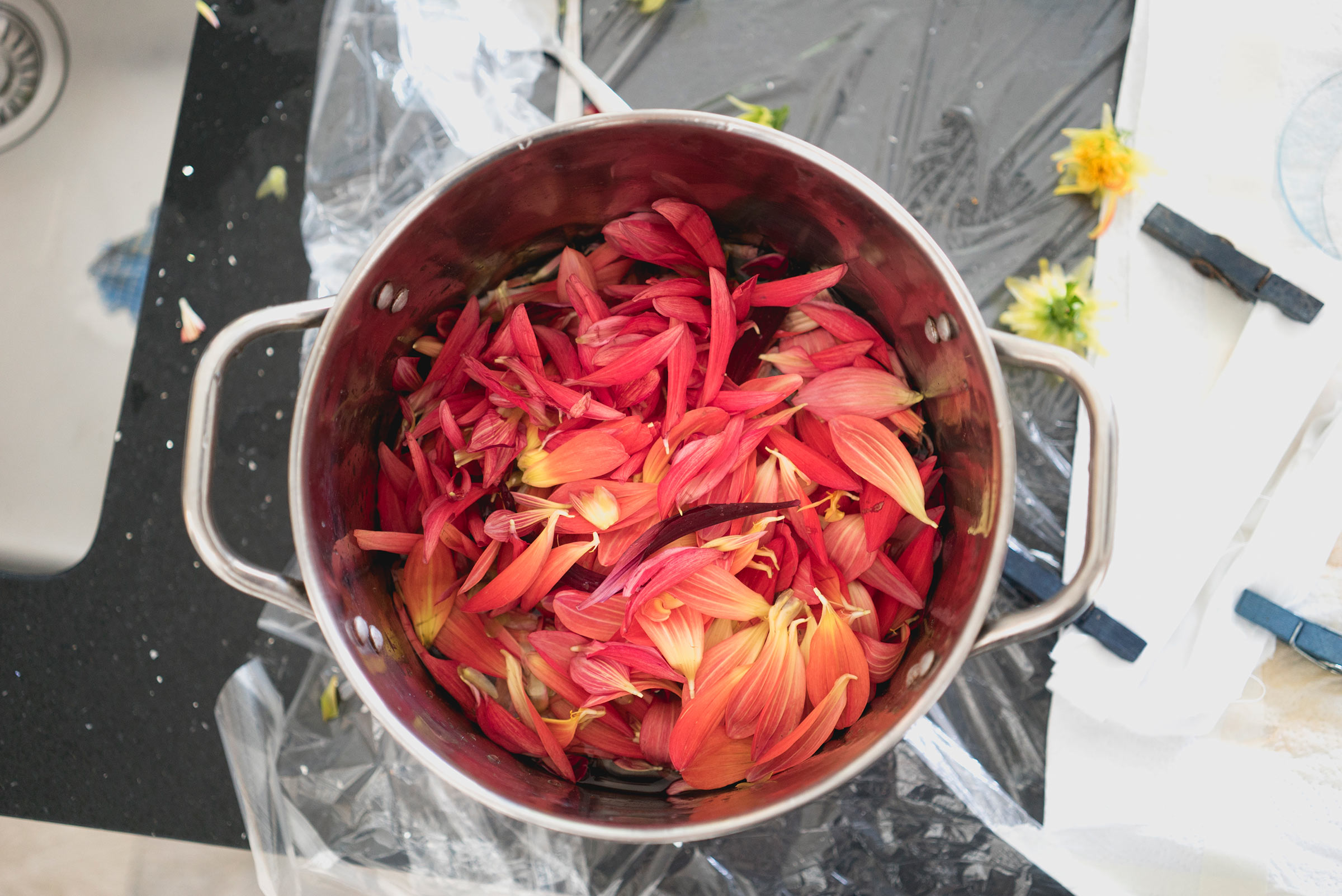 Teach Us made a dye bath using dahlias